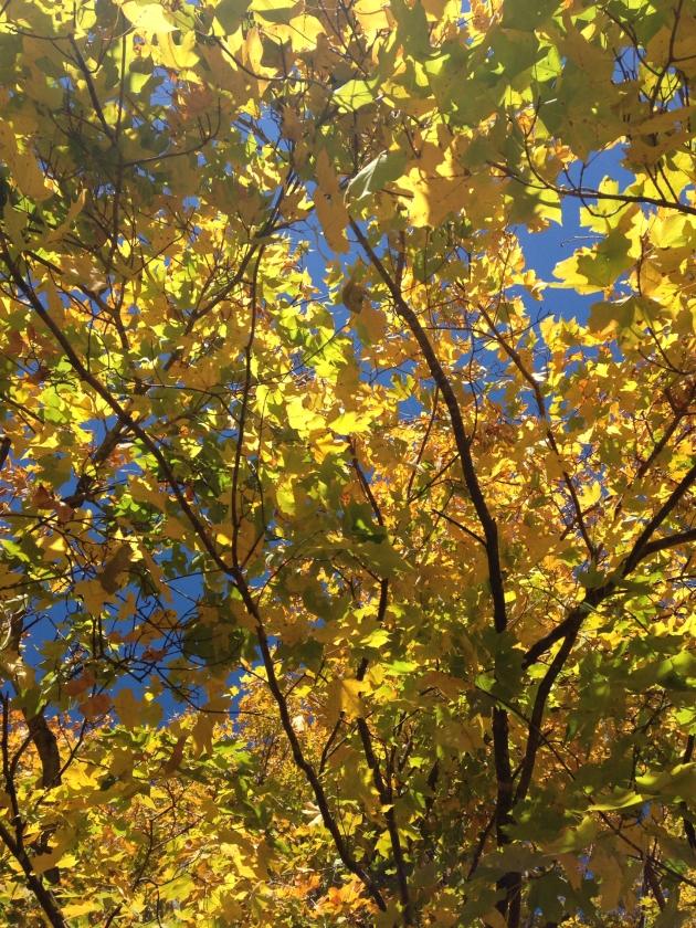 november colors | madeline made
