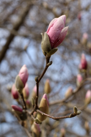 first signs of spring | madeline made